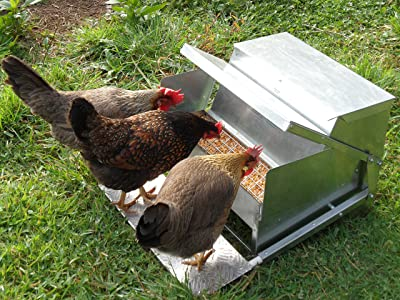 Grandpa's Feeders Automatic Chicken Feeder - 40lb Feed Capacity