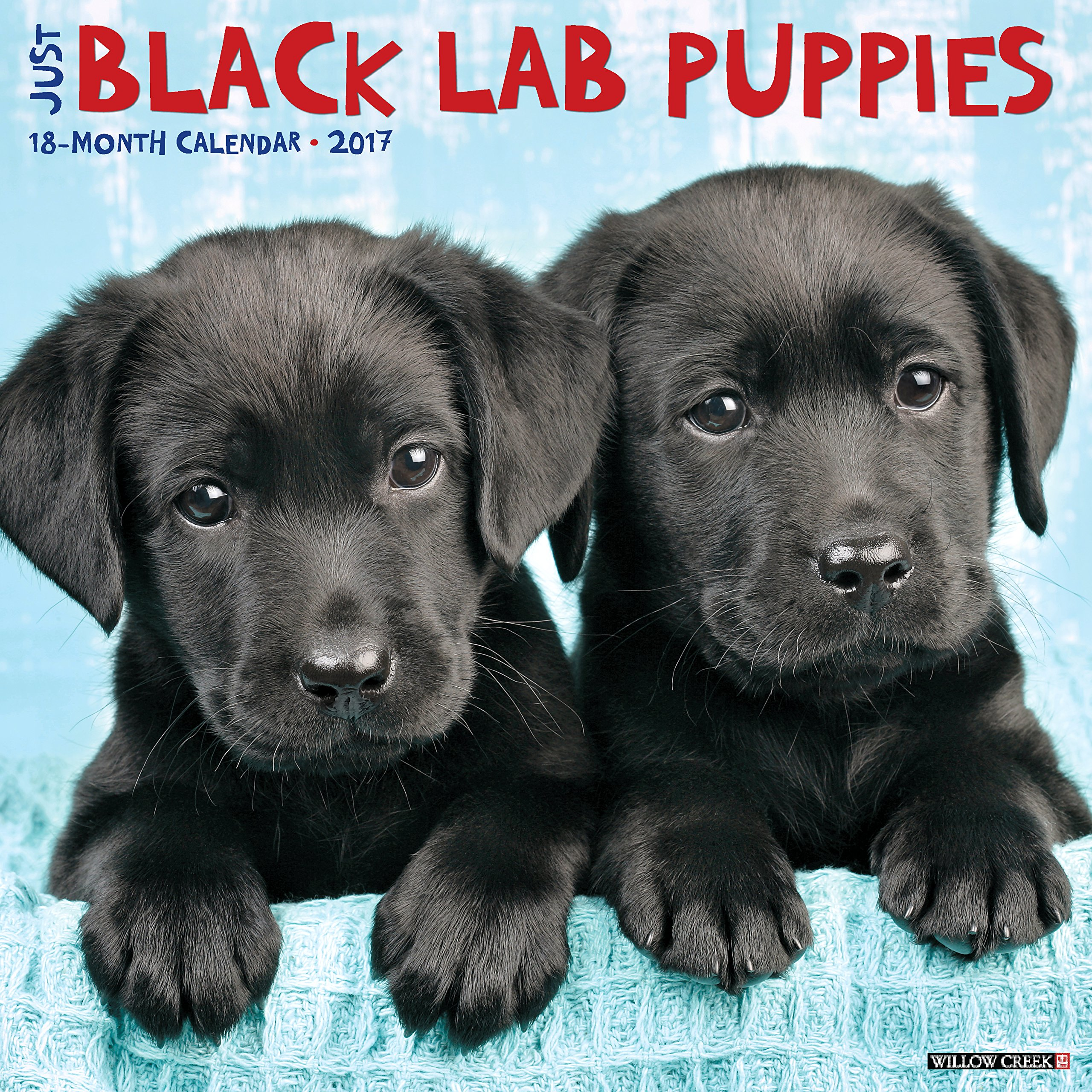 Amazon Just Black Lab Puppies 2017 Wall Calendar Dog Breed