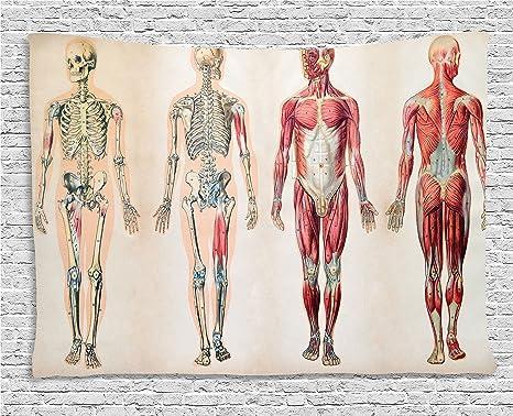Amazon.com: Ambesonne Human Anatomy Tapestry, Vintage Chart of Body ...