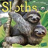 Sloths Wall Calendar 2017