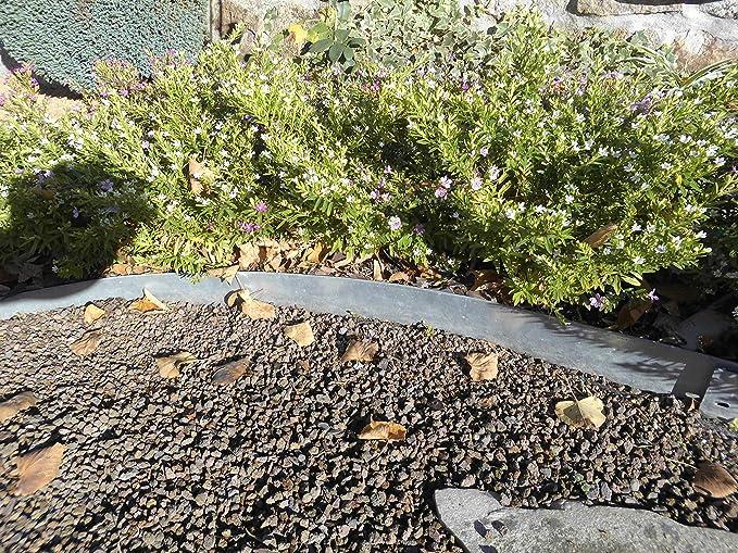 Serina - Borde delimitador de jardines (1 m, metal cincado): Amazon.es: Jardín