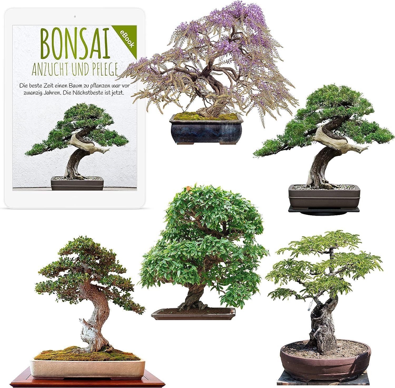 Semillas exóticas de Bonsai con alta tasa de germinación - Juego de Semillas de Plantas para su propio árbol de Bonsai (Mezcla de 5 incl. eBook GRATIS)