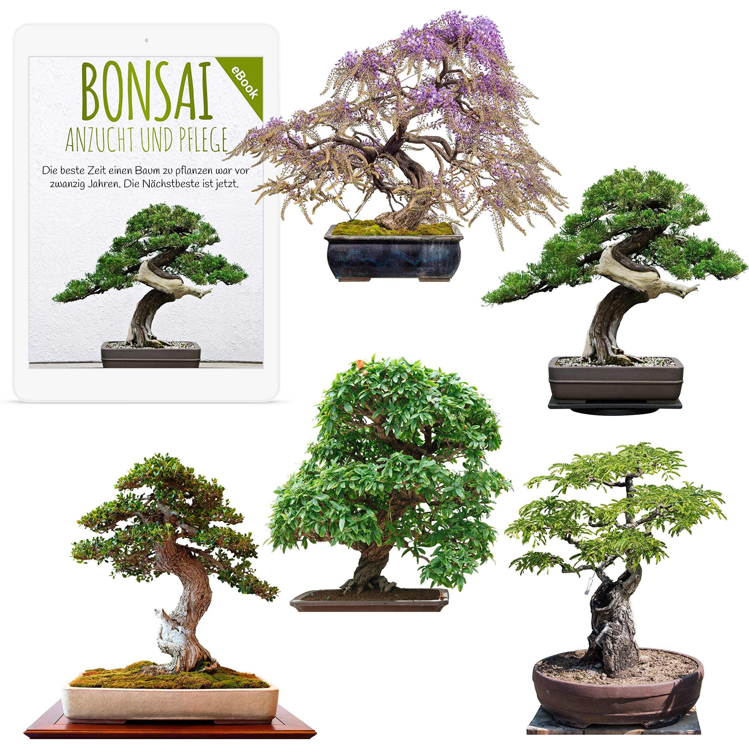 Exotic Bonsai Seeds With High Germination Rate Plant Seed Set For Your Own Bonsai Tree Mix Of 5 Incl Free Ebook Buy Online In India At Desertcart In Productid 130111881