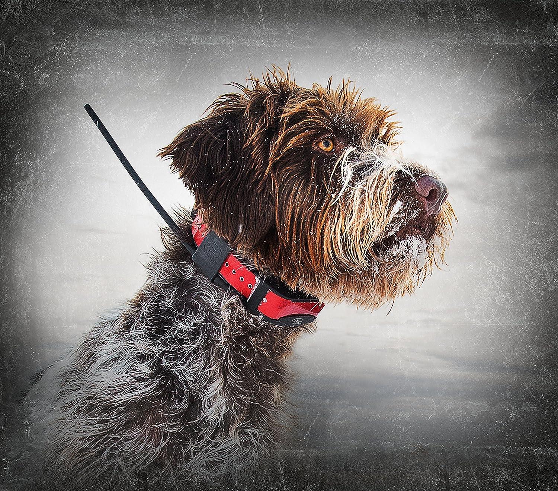 collier gps chien chasse sans abonnement