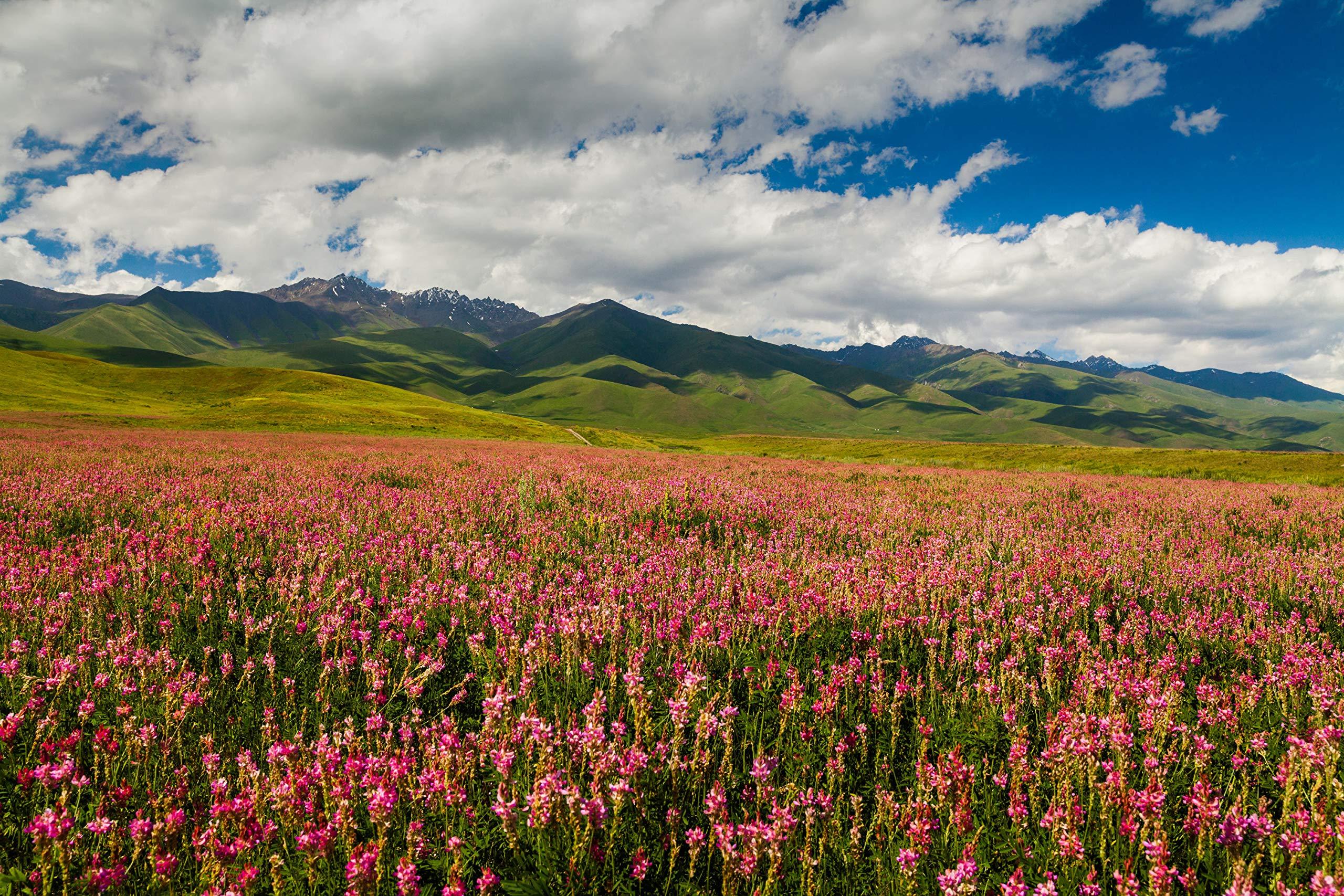 Kyrgyz Honey; Esparcet Raw Natural Sainfoin Mountain Honey; 17.63 Ounce Glass Jar by Mira Nova (Image #5)