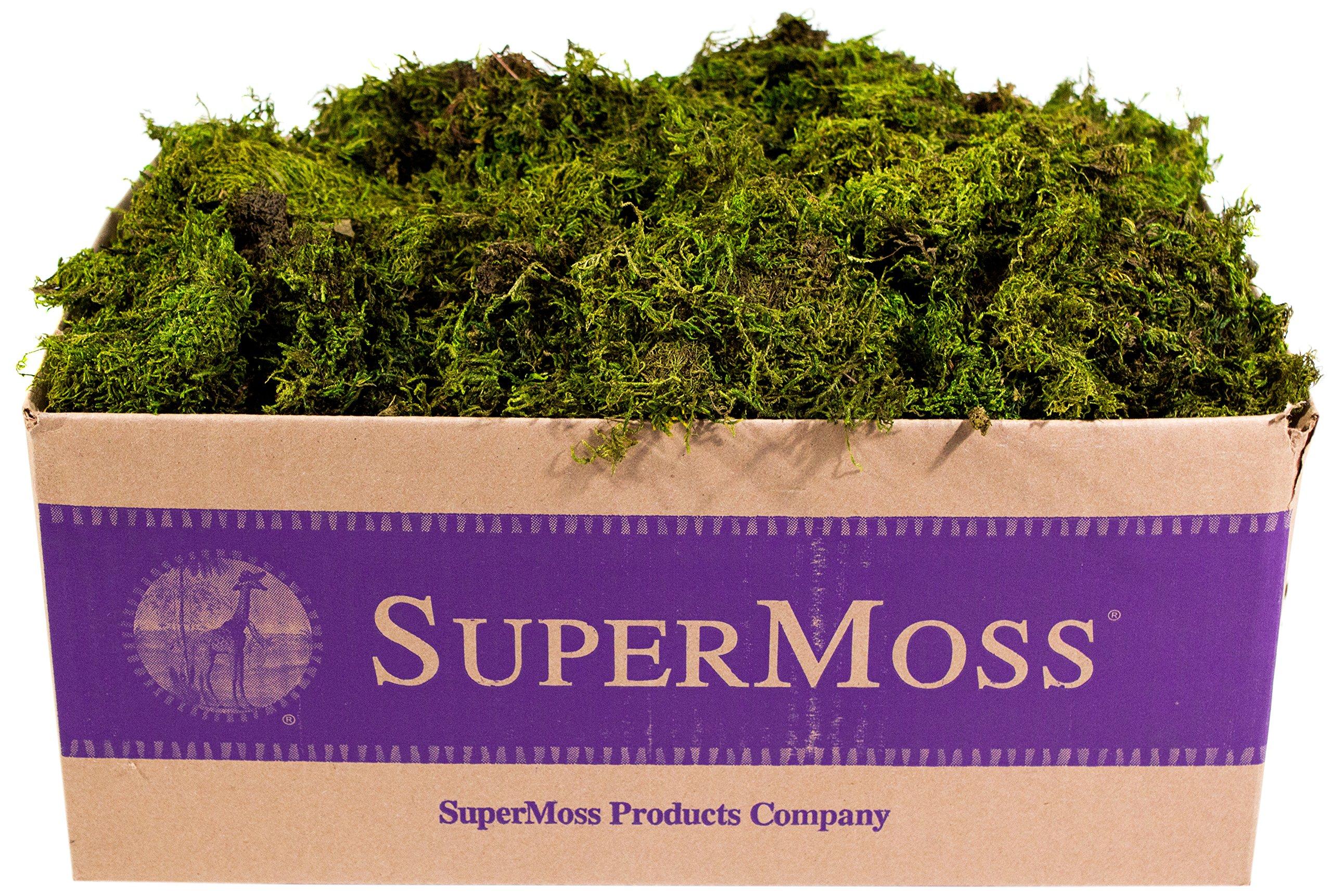 SuperMoss (22167) Sheet Moss Mini (Shredded) Preserved, Fresh Green, 3lbs by Super Moss