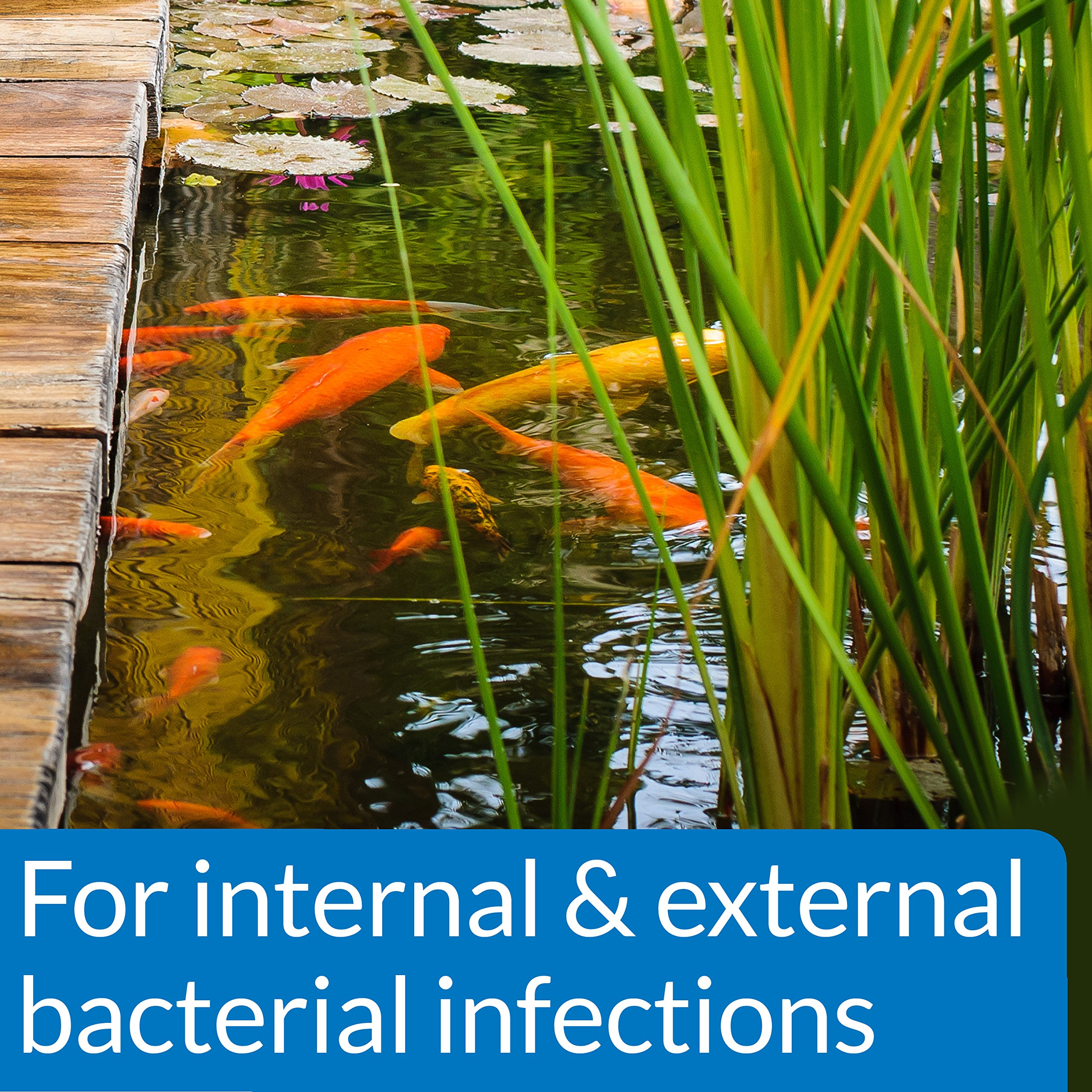 API POND PIMAFIX Antifungal Pond Fish Infection Remedy 64-Ounce Bottle by API (Image #3)