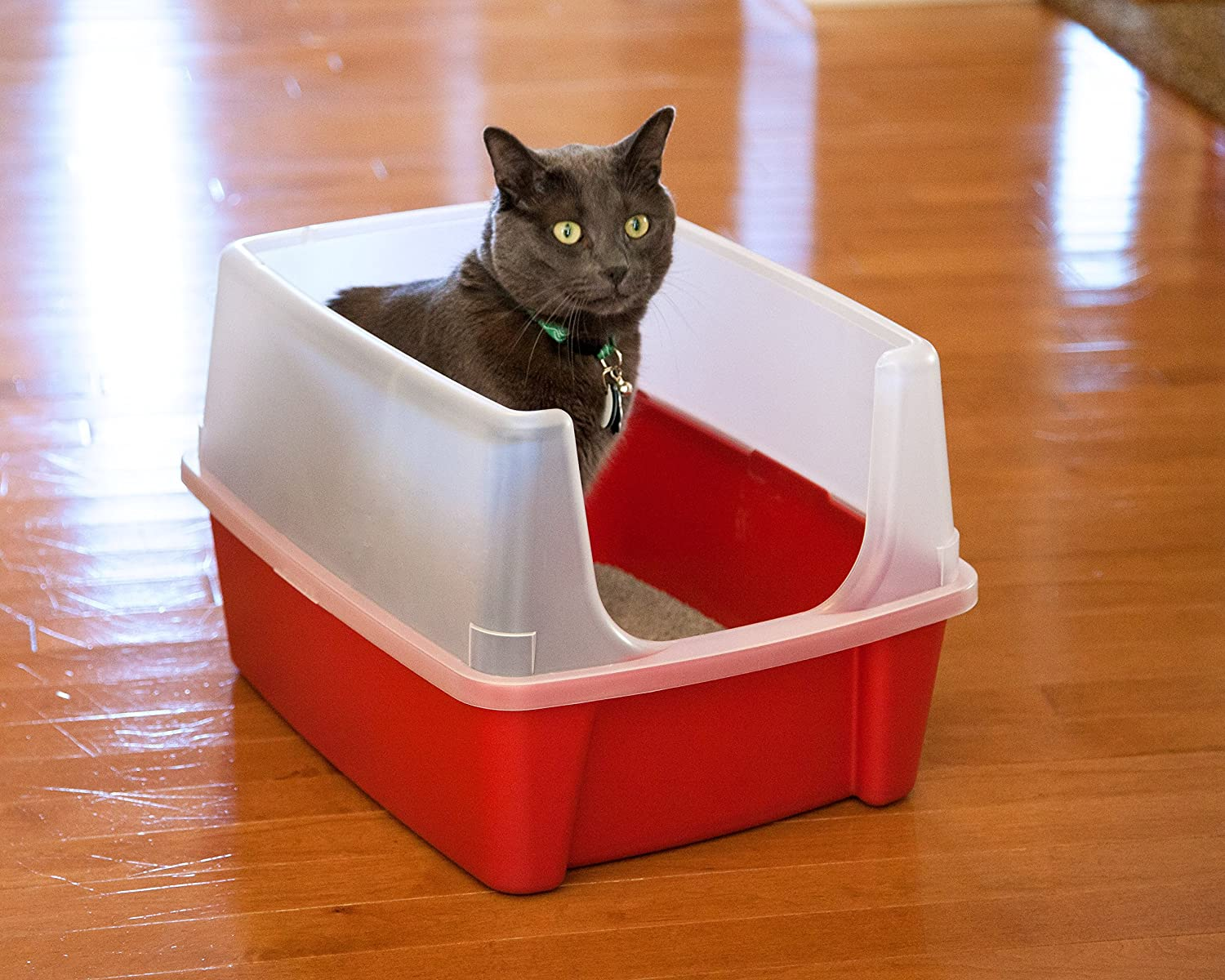 Amazon.com : IRIS Open Top Cat Litter Box Kit With Shield And Scoop, Red :  Pet Supplies