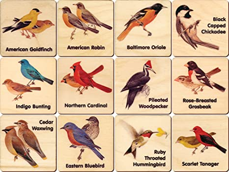 amazon com peterson backyard bird memory tiles made in usa toys rh amazon com peterson's backyard birds of the midwest peterson's backyard birds of the northeast poster