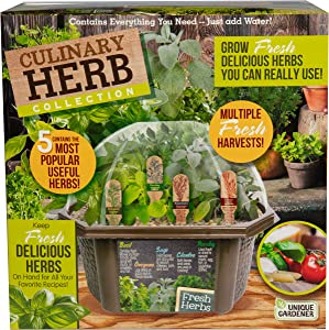 Indoor Herb Garden Starter Kit - Includes Potting Soil, Terrarium, 5 Herb Seed Packets Basil, Oregano, Rosemary Sage, Cilantro, and Parsley - DIY Kitchen Grow Kit for Growing Herbs