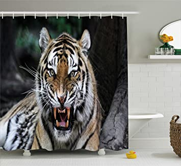 African Shower Curtain By Ambesonne Tiger Face With Roaring Wildlife Safari Savannah Animal Nature Zoo