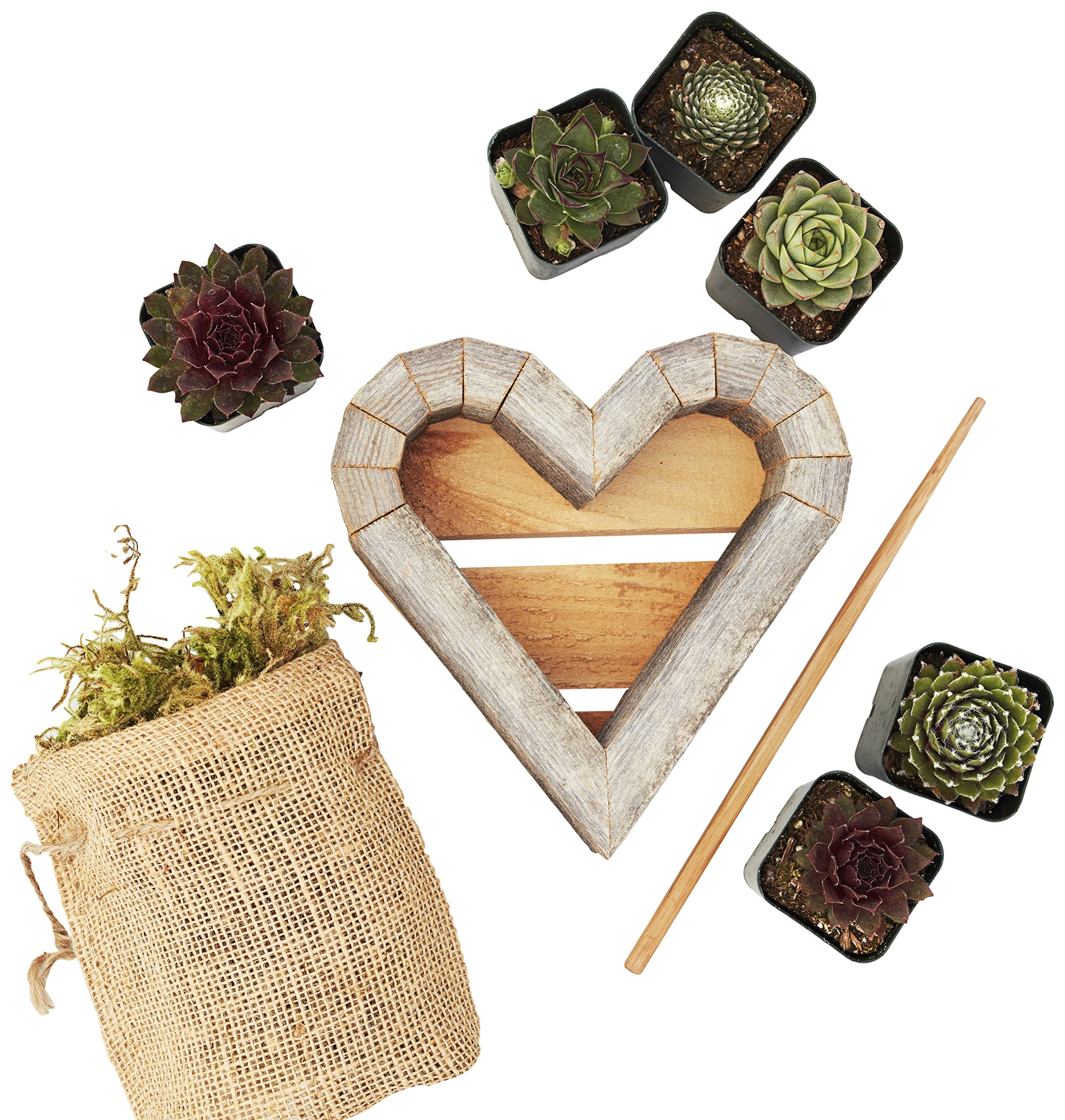 Succulent Gardens Small Succulent Heart Planter DIY Kit, 7'' Redwood Frame, Multicolor