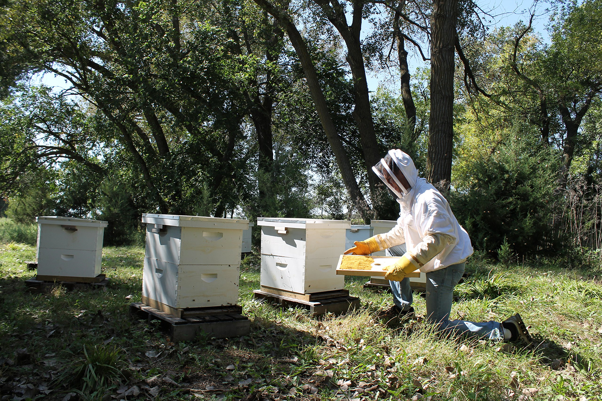 Raw Honey Pure Natural Nebraska Honey One 2lb Jar by Prairie River Honey Farm (Image #8)