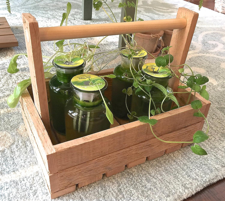 Amazon.com : Charming DIY Hydroponic Herb Garden. Kit Includes 1 ...