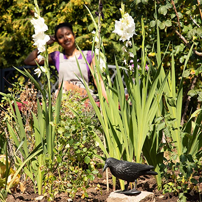 Relaxdays Cuervo Espantapájaros para Jardín, Plástico, Negro, 20 x 33 x 12 cm: Amazon.es: Jardín