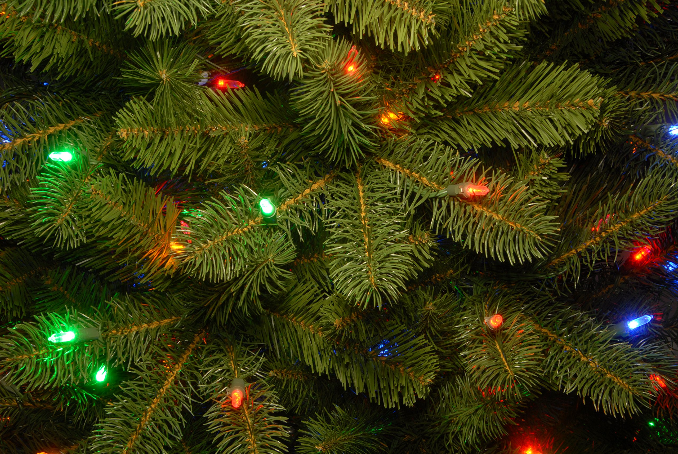 National-Tree-Downswept-Douglas-Fir-Tree-with-Multicolor-Lights