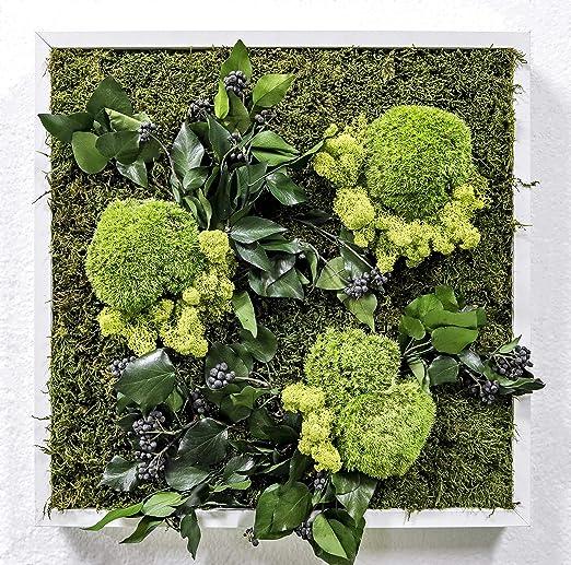 Mi Jardín Vertical Musgo Preservado Cuadro Vegetal 50 x 50 cm ...