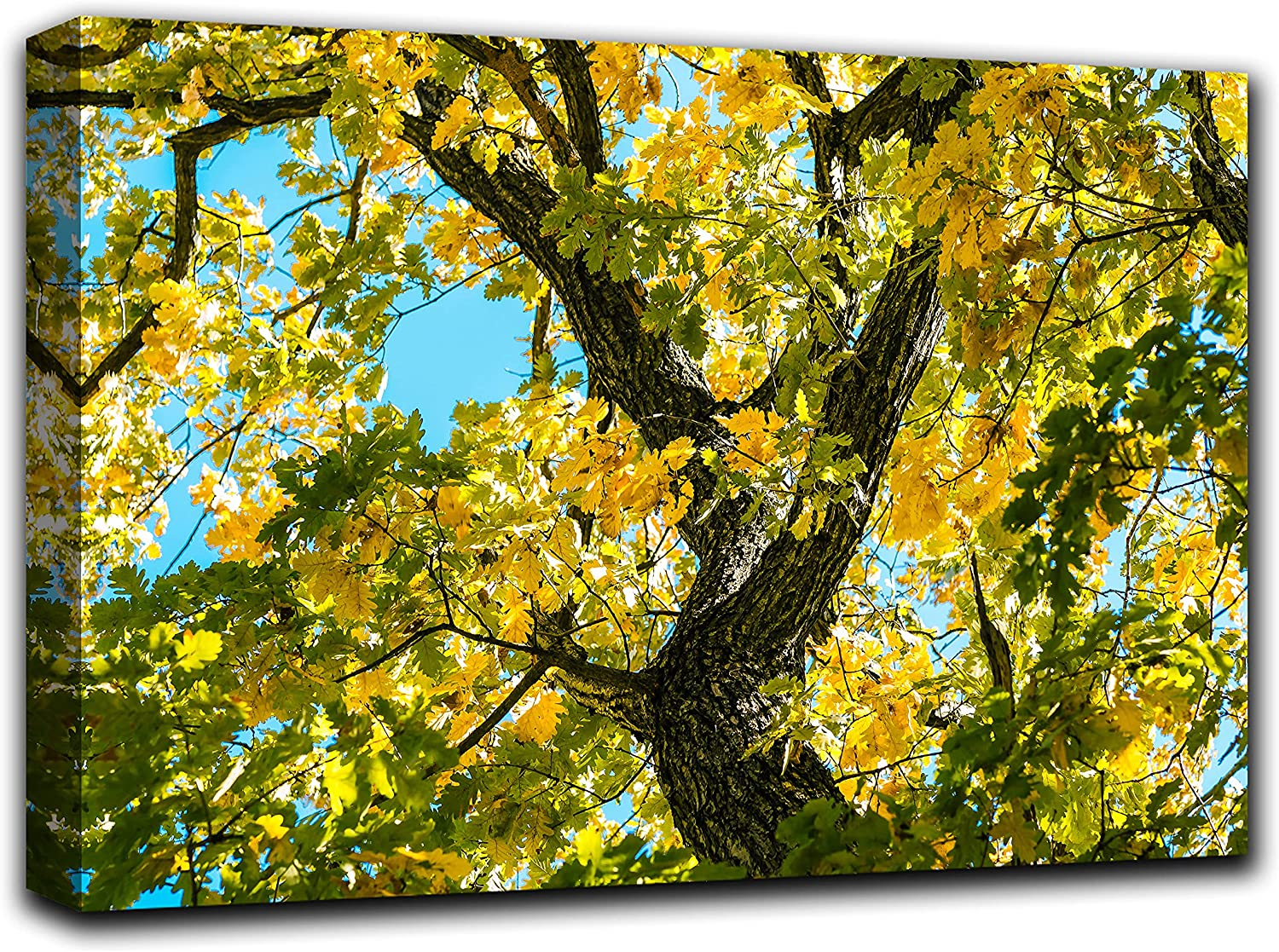 Oak Tree Branches Wall Art Decor Picture Painting Poster Print on Canvas Panels Pieces - Nature Theme Wall Decoration Set - Nature Sky Trunk Wall Picture for Living Room Bedroom 33 by 50 in