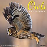 Owls of North America 2017 Calendar