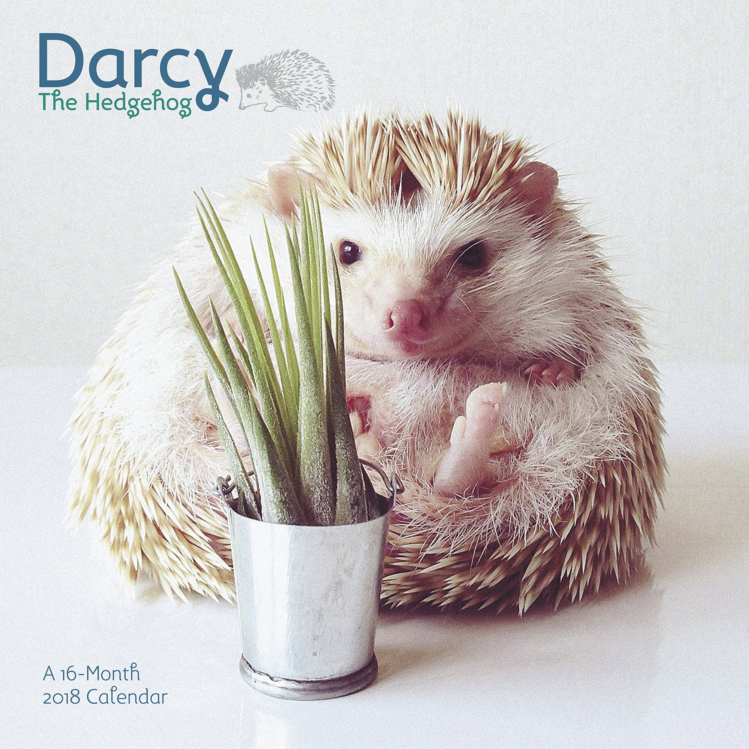 Read Online 2018 Darcy the Hedgehog Wall Calendar (Day Dream) pdf