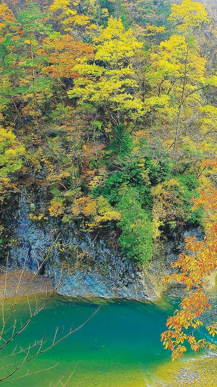森 Hd 720 1280 壁紙 秋たけなわ 青い渓流と紅葉が作り出す抱返り渓谷