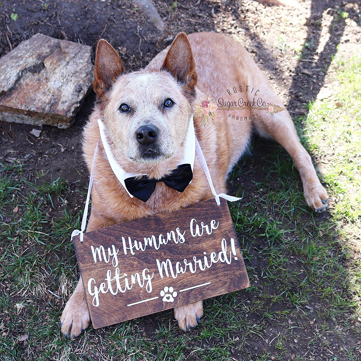 Amazon My Humans Are Getting Married Dog Wedding Sign Pet Signs Fun Ring Bearer: Wedding Ring Barrier Dogs At Websimilar.org