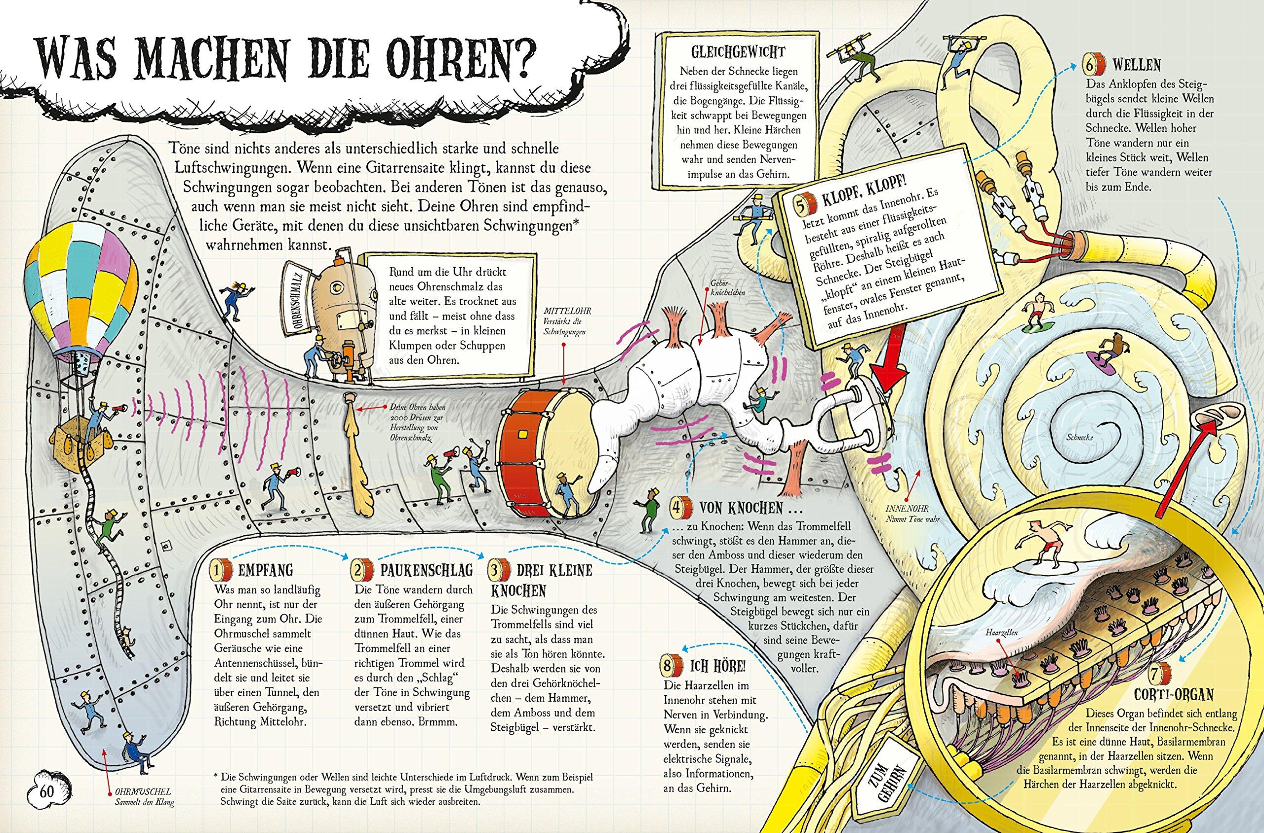 So funktioniert dein Körper: Von den Gehirnzellen bis zum kleinen ...