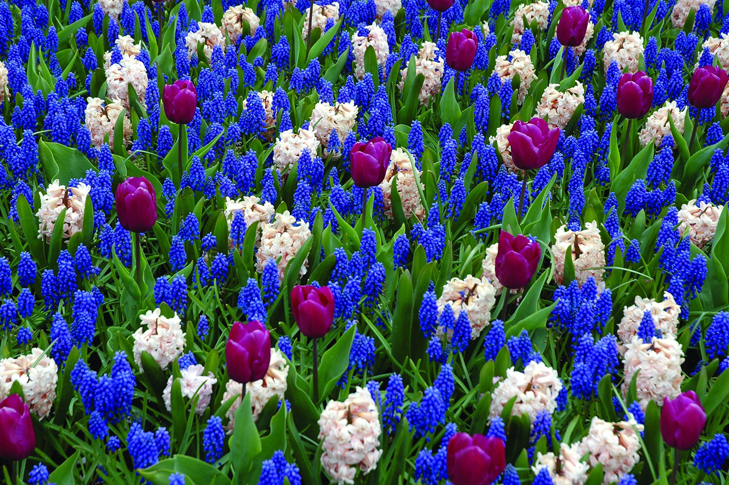 Burpee's Love is in the Air Mix - 20 Flower Bulbs   Blue & White