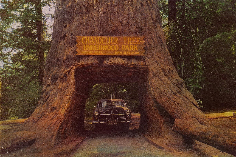 Amazon.com : Vintage Oversize Postcard Of Chandelier Tree ...
