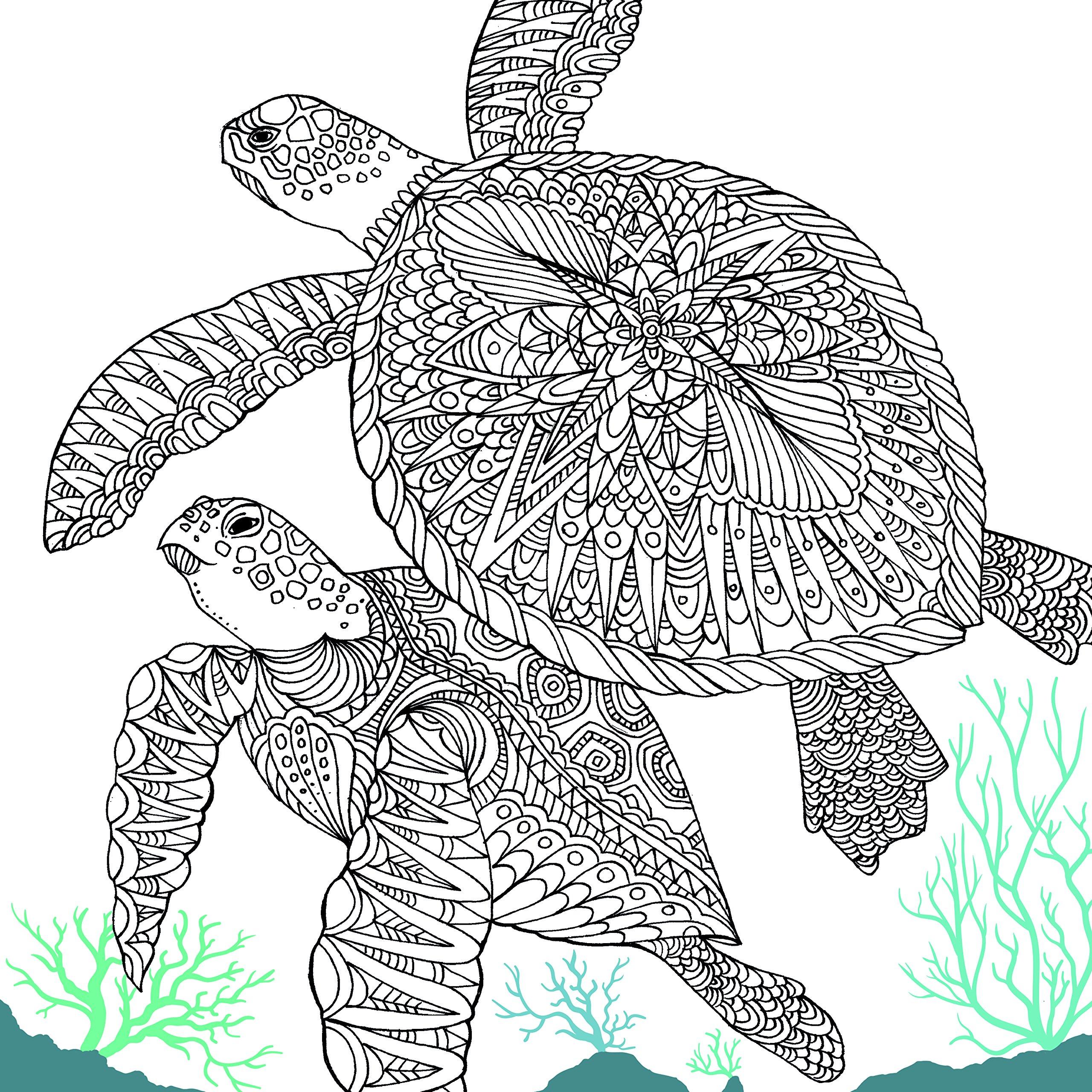Amazon The Aquarium Marine Portraits To Color 9781438009476 Richard Merritt Claire Scully Books