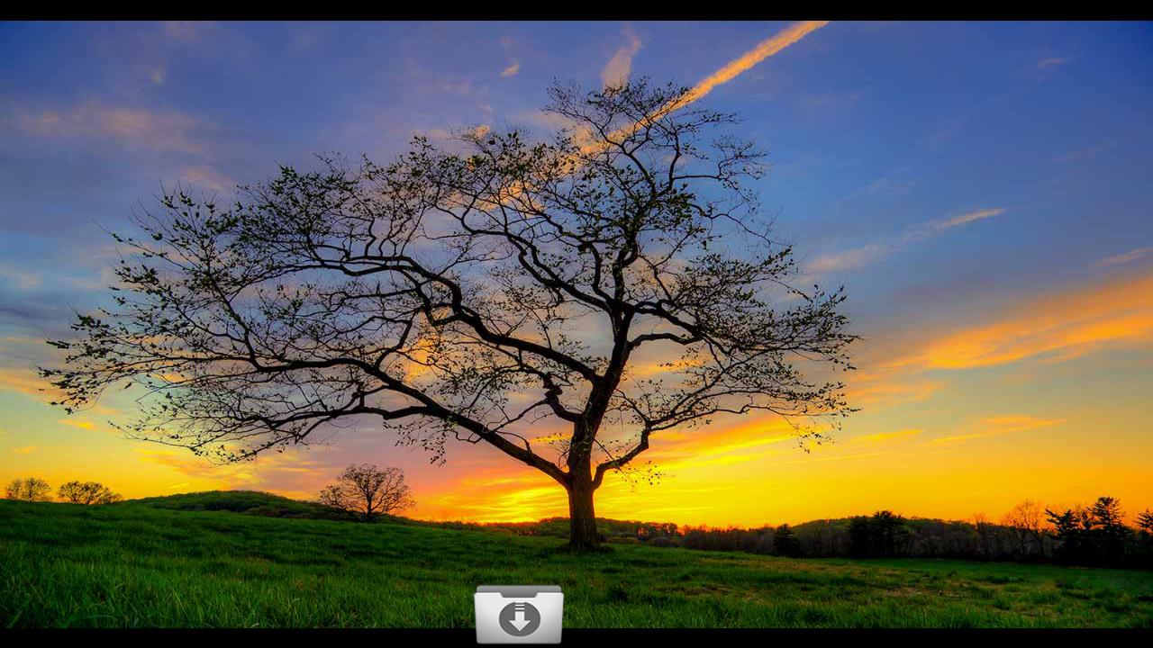 amazon nature wallpaper - photo #36