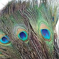 ERIKORD 50pcs Peacock Feathers Natural Genuine Peacock Feathers 25-32cm Feathers for Art Crafts DIY Home Decor Harmless…