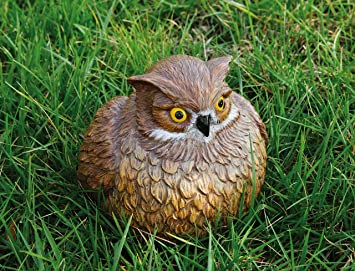 Amazoncom Portly Owl Statue Outdoor Statues Patio Lawn
