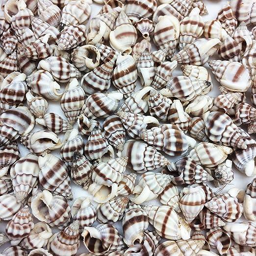 200 Nassarius sea shells Seashells Shell cones conch craft crafts jewelry art