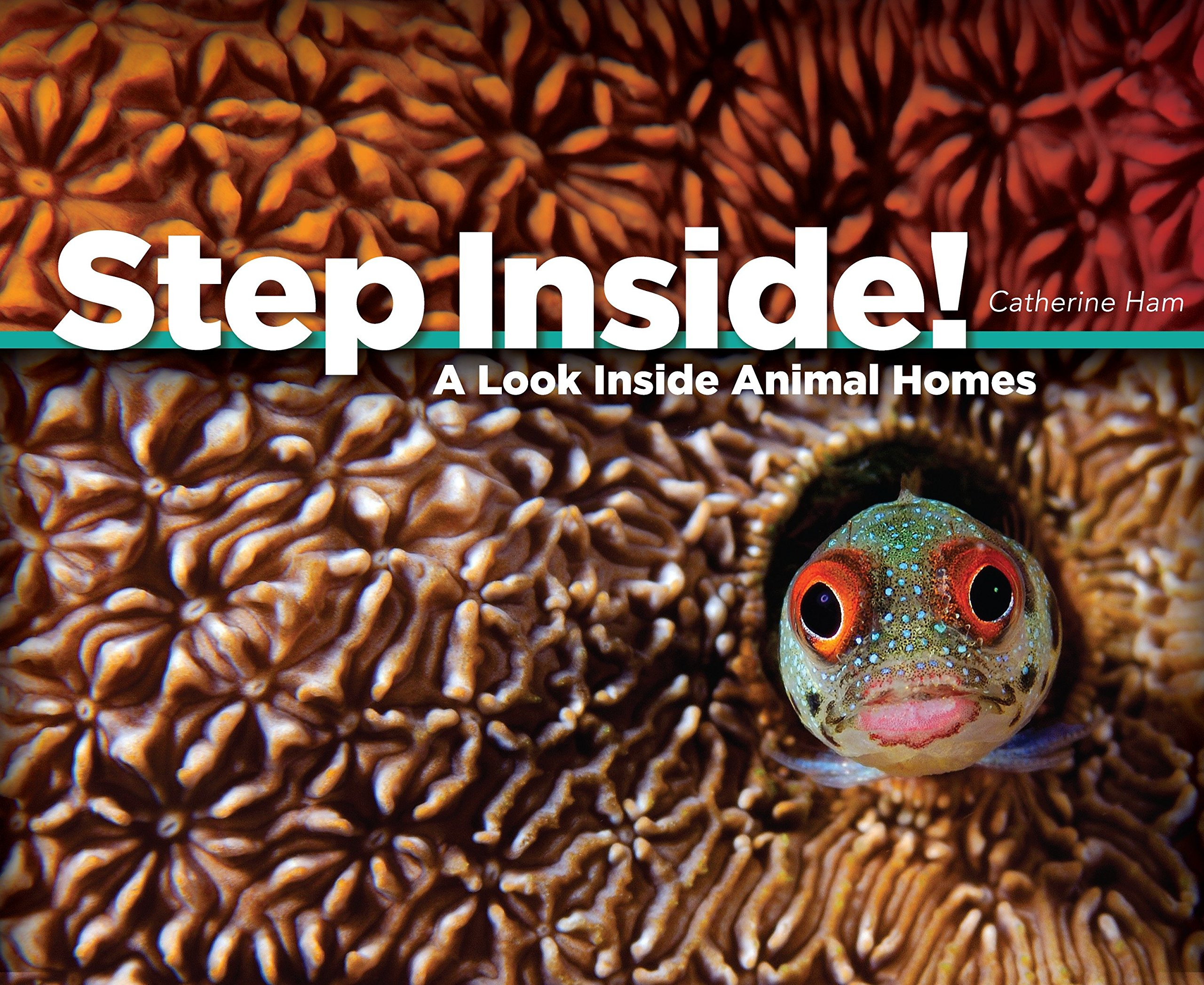 Step Inside!: A Look Inside Animal Homes pdf
