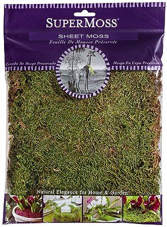 Supermoss 21580 Sheet Moss Dried Natural 2oz Amazon Co Uk