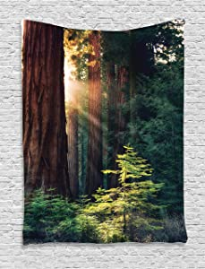 """Ambesonne National Parks Tapestry, Morning Sunlight in Wilderness Yosemite Sierra Nevada United States Nature, Wall Hanging for Bedroom Living Room Dorm Decor, 40"""" X 60"""", Green Brown"""