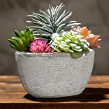 MyGift 7-Inch Assorted Artificial Succulent