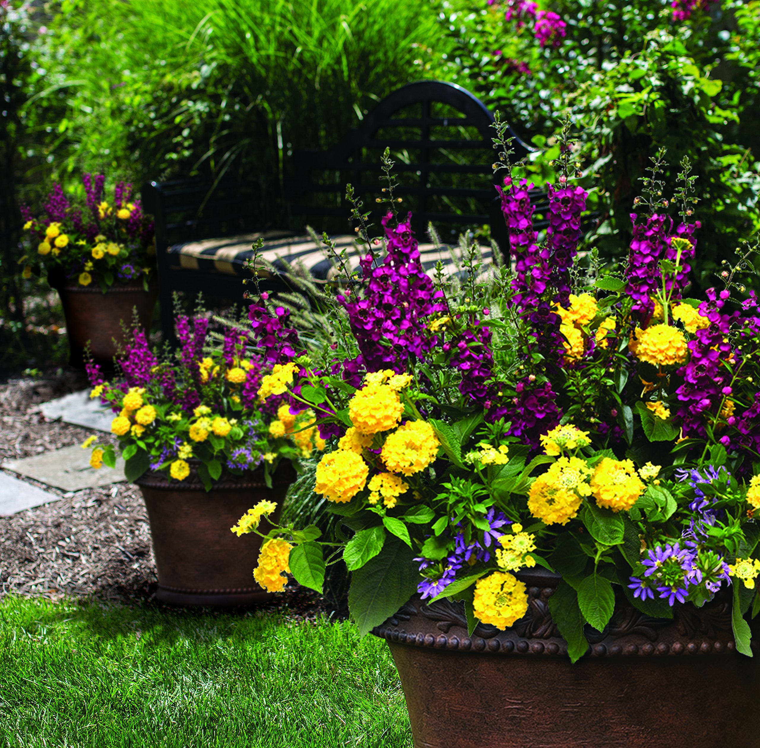 Burpee Combo 'Daydream' - Create Instant Colorful Container Gardens with Four 4 in. pots by Burpee (Image #4)