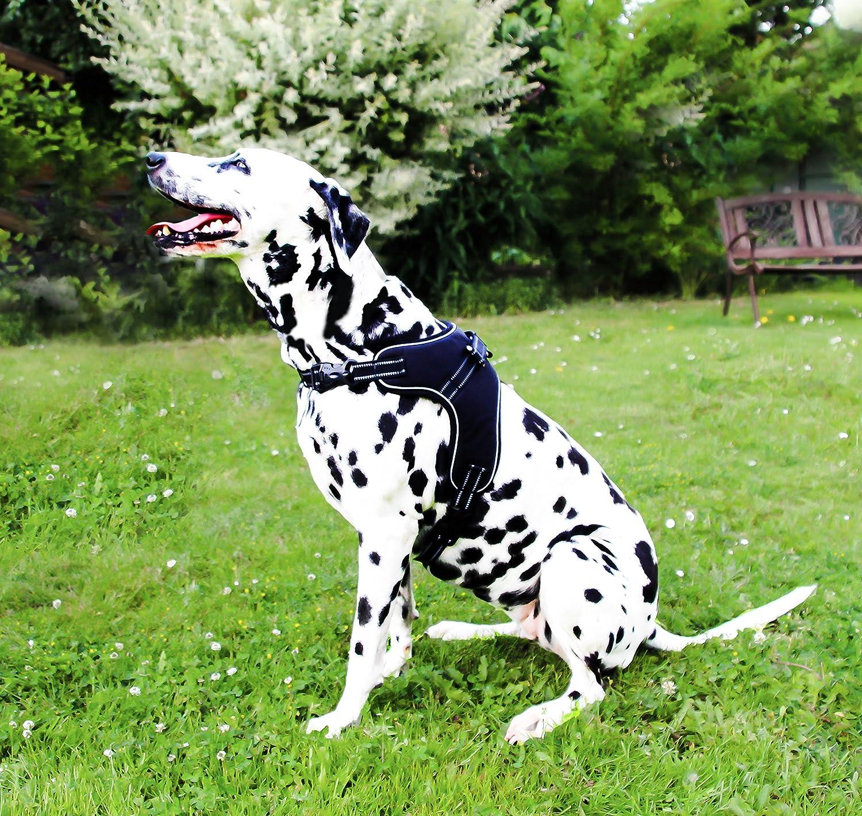 molosos arnés del perro reflectante, pecho Vajilla Seguridad ...