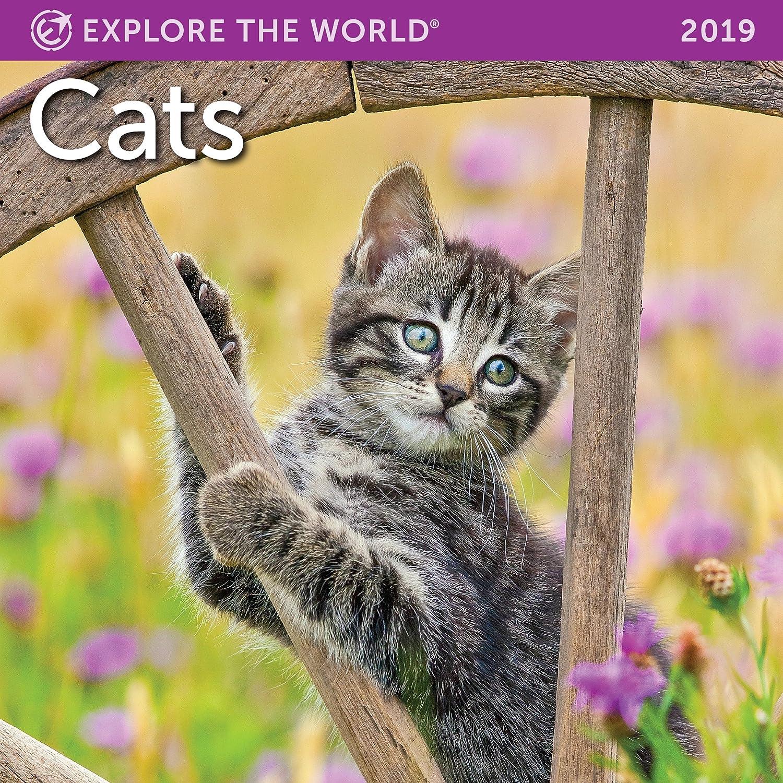 Mini calendario de pared del 2019 (enero-diciembre) con gatos, de 17,8 x 17,8 cm: Amazon.es: Oficina y papelería