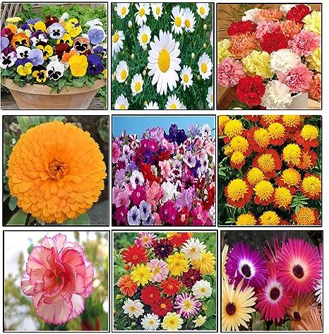 Variety House Winter Season Flower Seeds Pack Of 10 Varieties