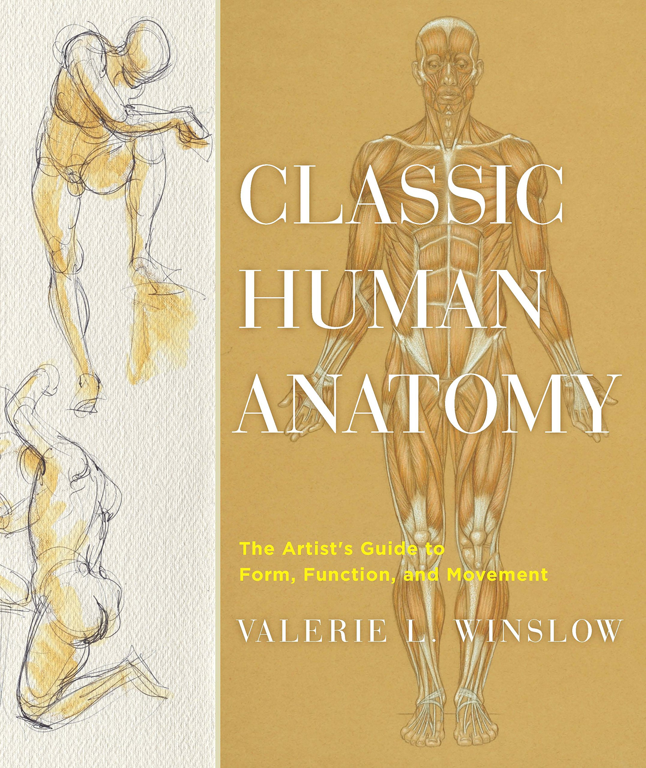 Classic human anatomy the artists guide to form function and classic human anatomy the artists guide to form function and movement valerie l winslow 9780823024155 amazon books fandeluxe Gallery