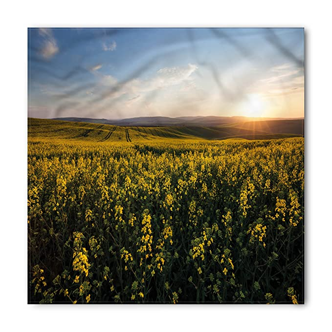 Flower field sunset High Resolution Image Unavailable Amazoncom Amazoncom Ambesonne Landscape Bandana Sunset Flower Field Unisex