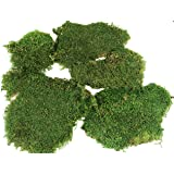 Green Sheet Moss Dried, Natural for Fairy Gardens, Terrariums, or Any Craft or Floral Project (Sheet Moss-Green 6 OZ) …