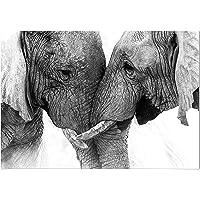 Panorama Cuadro de Aluminio Pareja Elefantes 70x50cm