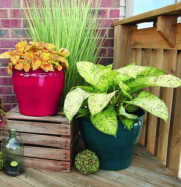 marvelous robert allen home and garden. Amazon com  Robert Allen Home Garden MPT01602 Avery Classic Planter 10 Autumn Blaze Outdoor