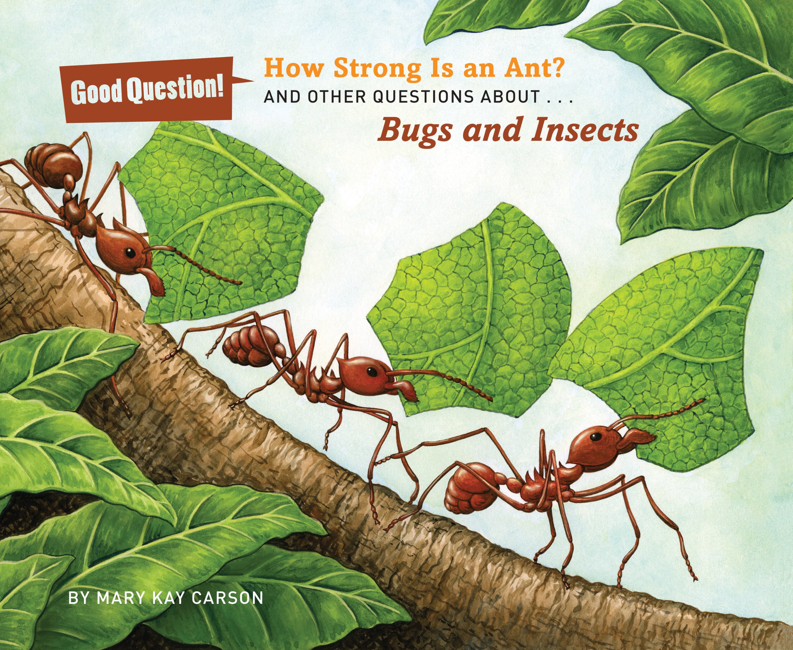 Download How Strong Is an Ant?: And Other Questions About Bugs and Insects (Good Question!) pdf