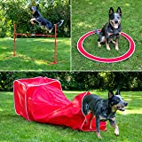 SportPet Designs Agility Training for Dogs