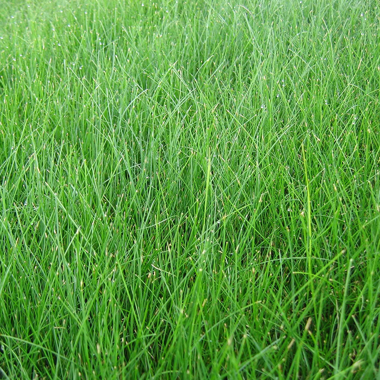 Mulch Fertilizer EZ Straw MLEZSUNSHD114 Lawn Repair Mix Combination Seed 11 lb. Covers 200 sq. ft. Sun//Shade Blend